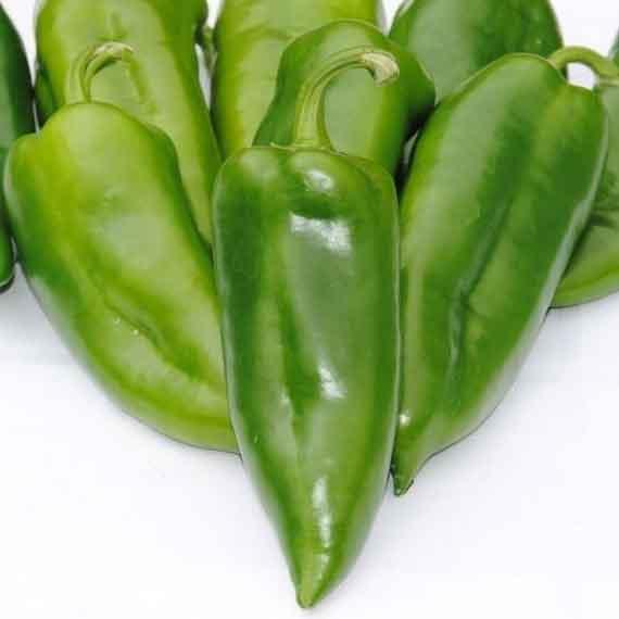 Paprika zelena šilja